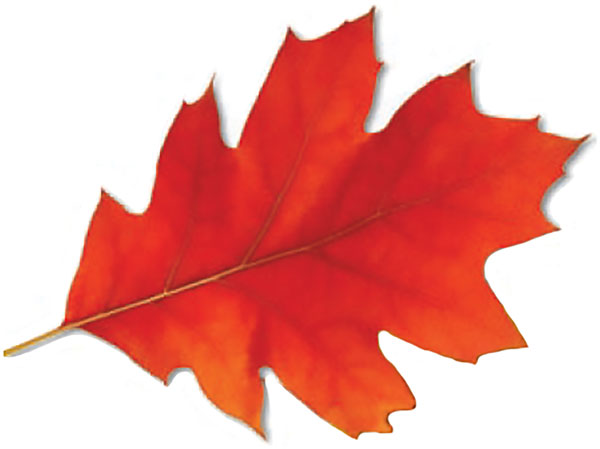 Photo of a red leaf
